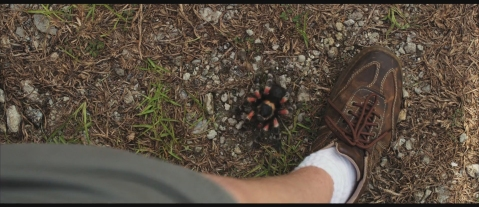 we-re-the-millers-Tarantula-Attack